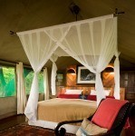 Selinda Camp: Rooms 2-9