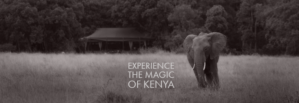A Sarova  Mara  Game Camp