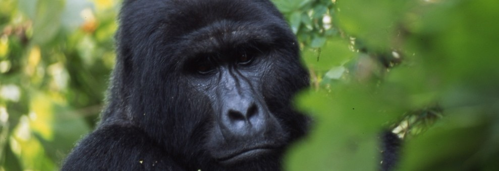 Gorillas, Mountains and Lakes of Rwanda